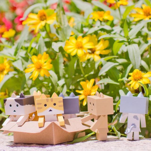 Nyanboard Danboard Cat Flowers